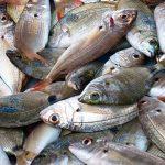Продажба на жива риба | Рибен магазин в Русе – магазин Дунав